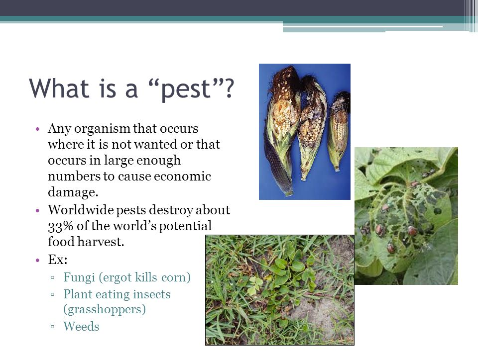 """What is a """"pest""""? Any organism that occurs where it is not wanted or that occurs in large enough numbers to cause economic damage. Worldwide pests des"""