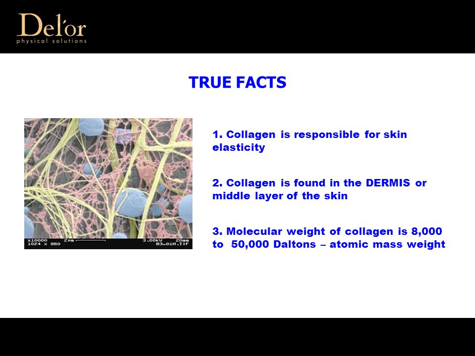 TRUE FACTS 1. Collagen is responsible for skin elasticity 2. Collagen is found in the DERMIS or middle layer of the skin 3. Molecular weight of collag