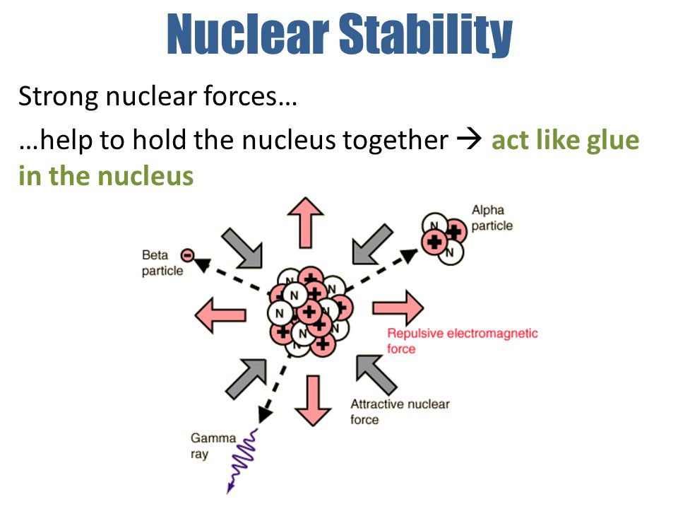 Nuclear Stability Strong nuclear forces… …help to hold the nucleus together  act like glue in the nucleus