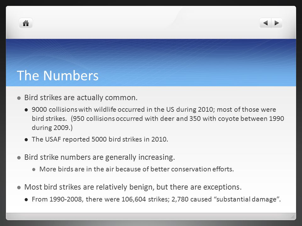 The Numbers Bird strikes are actually common.