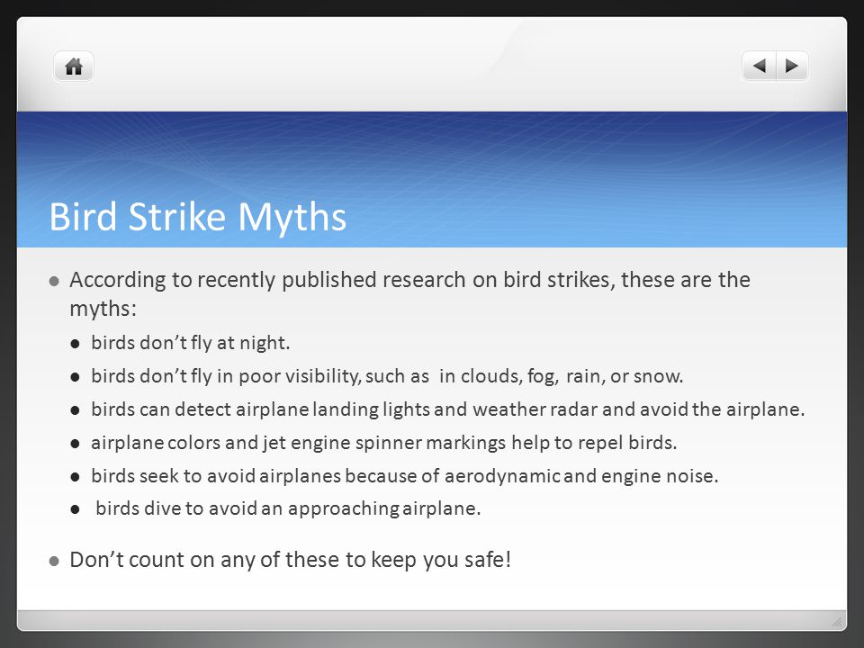Bird Strike Myths According to recently published research on bird strikes, these are the myths: birds don't fly at night.