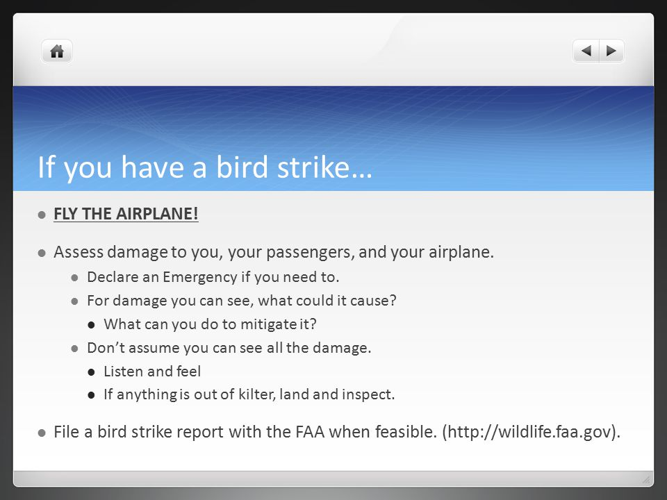 If you have a bird strike… FLY THE AIRPLANE.