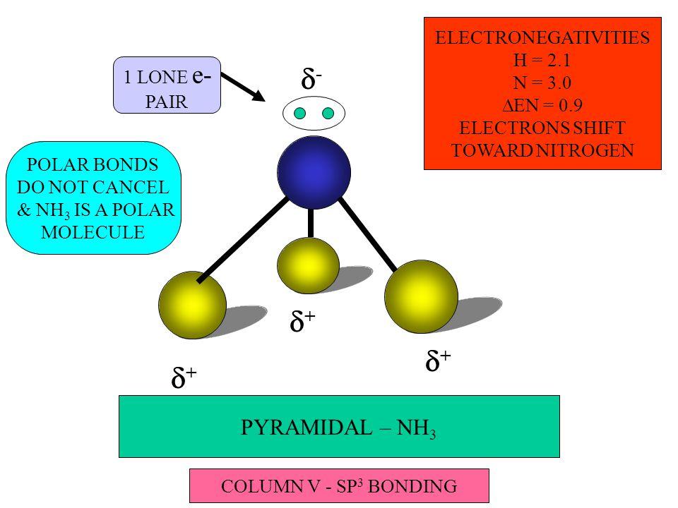 PYRAMIDAL – NH 3 1 LONE e- PAIR -- ++ ++ ++ ELECTRONEGATIVITIES H = 2.1 N = 3.0  EN = 0.9 ELECTRONS SHIFT TOWARD NITROGEN POLAR BONDS DO NOT CANCEL & NH 3 IS A POLAR MOLECULE COLUMN V - SP 3 BONDING