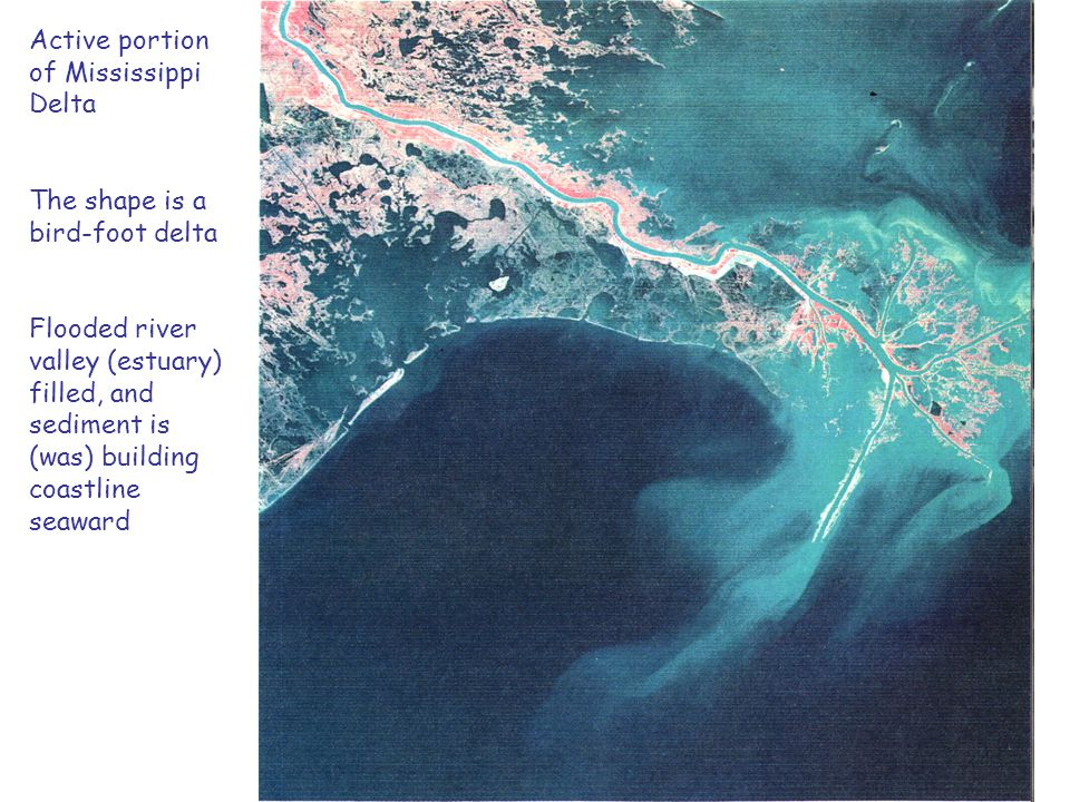 Active portion of Mississippi Delta The shape is a bird-foot delta Flooded river valley (estuary) filled, and sediment is (was) building coastline sea