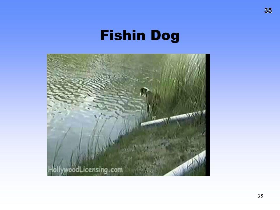 35 35 Fishin Dog