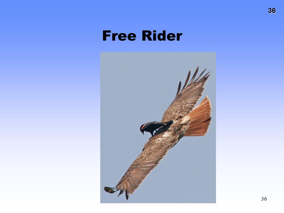 36 36 Free Rider
