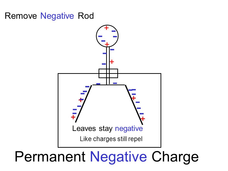 + + + + + + + - - - - - - - + + + + - - - - - - - - - - - - - - - - - - Permanent Negative Charge Remove Negative Rod Like charges still repel Leaves