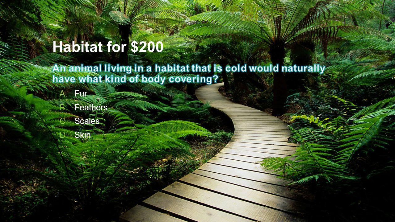 Habitat for $200