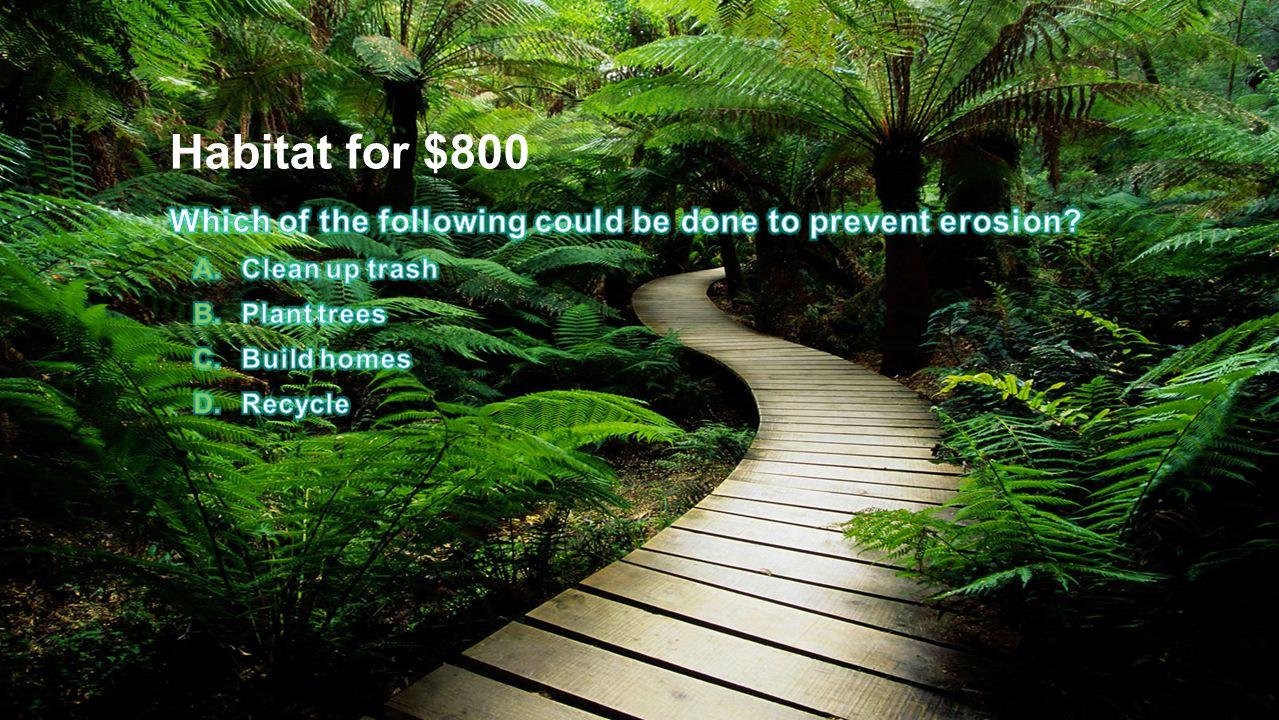 Habitat for $800