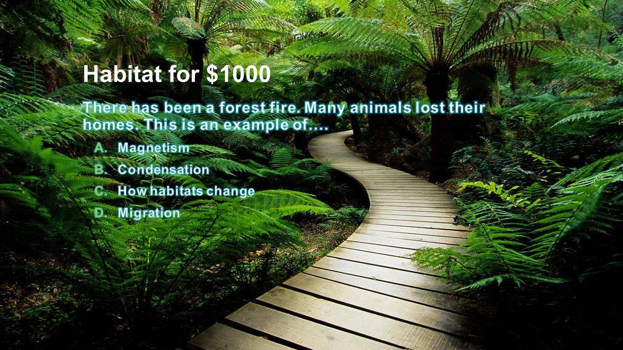 Habitat for $1000