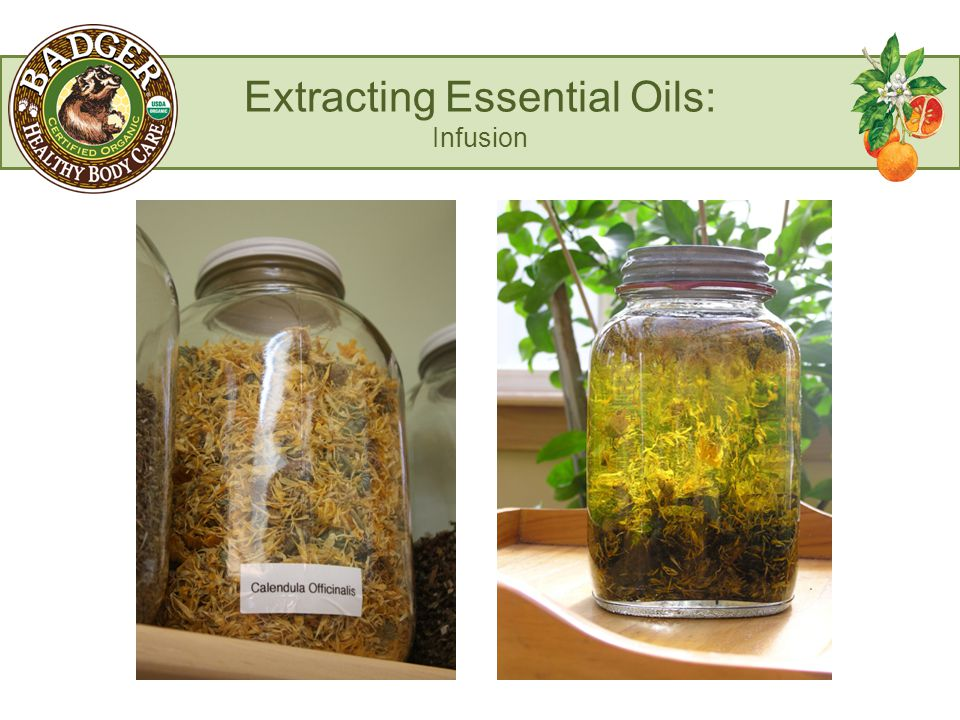 Extracting Essential Oils: Infusion