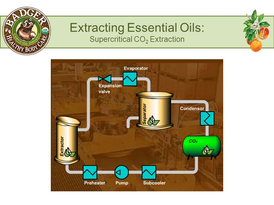 Extracting Essential Oils: Supercritical CO 2 Extraction