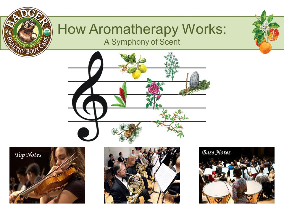 How Aromatherapy Works: A Symphony of Scent Top Notes Base Notes