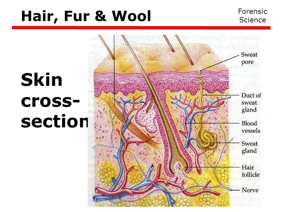 Forensic Science Hair, Fur & Wool Skin cross- section