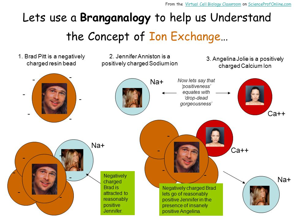 Lets use a Branganalogy to help us Understand the Concept of Ion Exchange… 1.