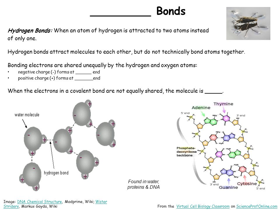 _________ Bonds Hydrogen Bonds: When an atom of hydrogen is attracted to two atoms instead of only one.