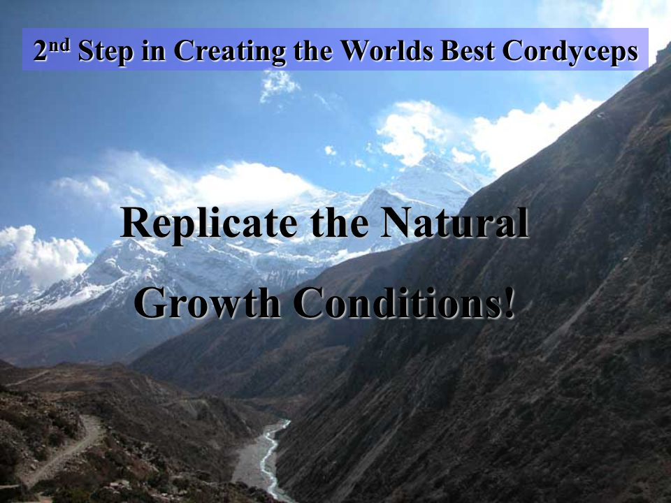 2 nd Step in Creating the Worlds Best Cordyceps Replicate the Natural Growth Conditions!