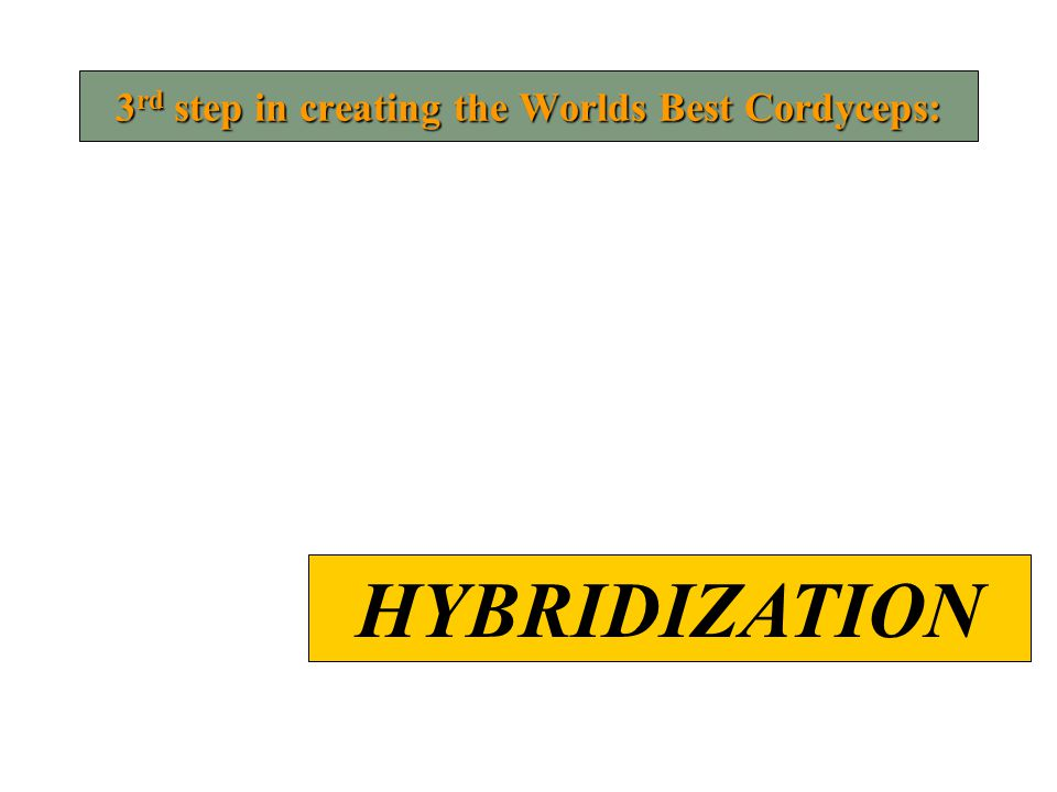 3 rd step in creating the Worlds Best Cordyceps: HYBRIDIZATION