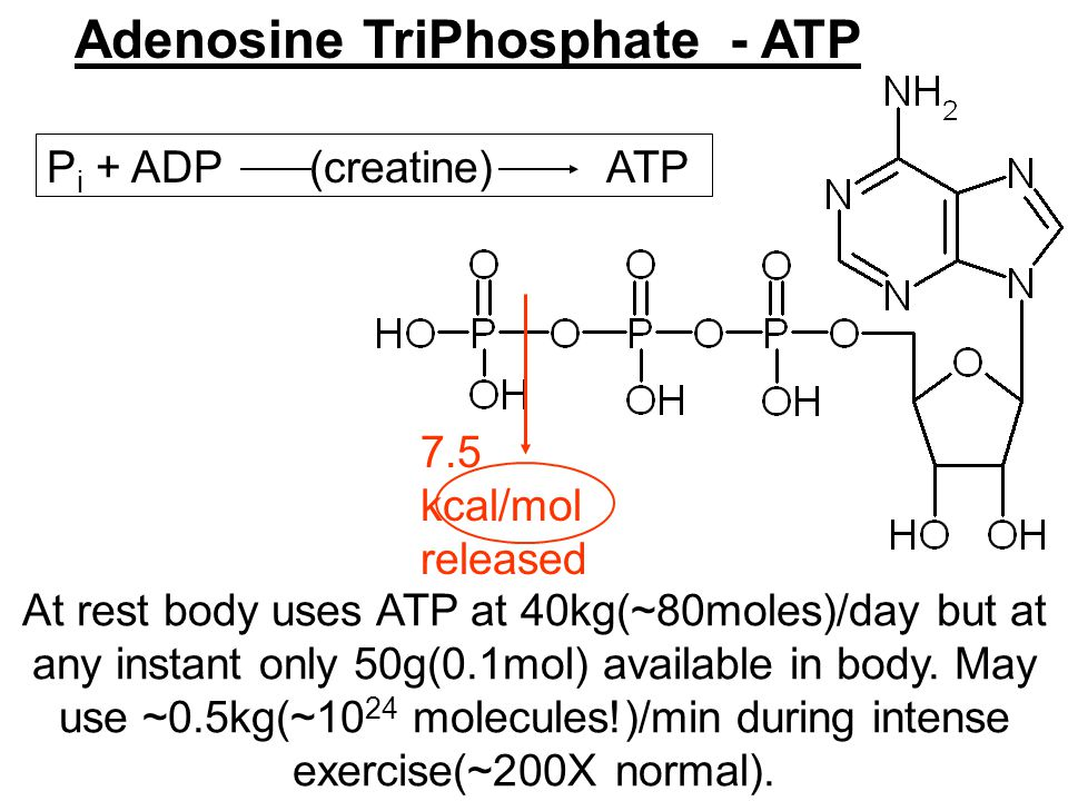 Adenosine TriPhosphate - ATP At rest body uses ATP at 40kg(~80moles)/day but at any instant only 50g(0.1mol) available in body.