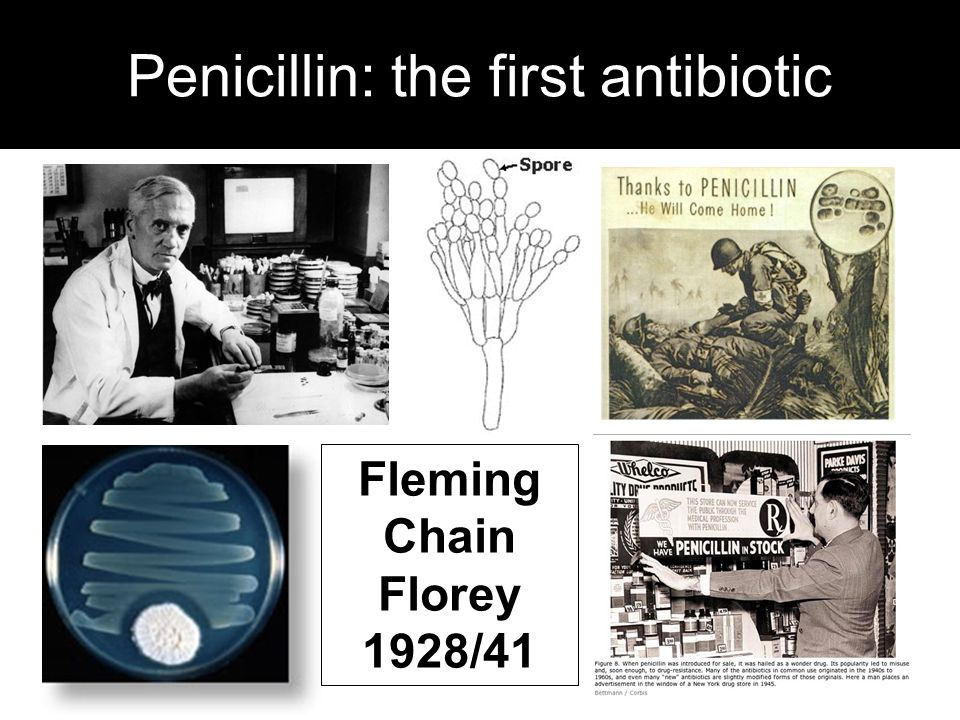 Penicillin: the first antibiotic Fleming Chain Florey 1928/41