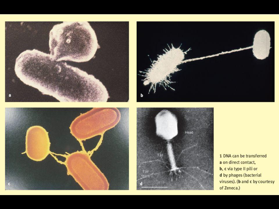 Down in the pathospere resistance profiling of soil bacteria D Costa et al 2006