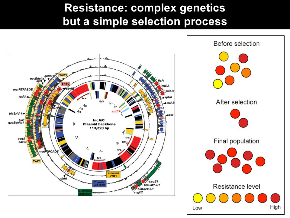 Resistance: complex genetics but a simple selection process
