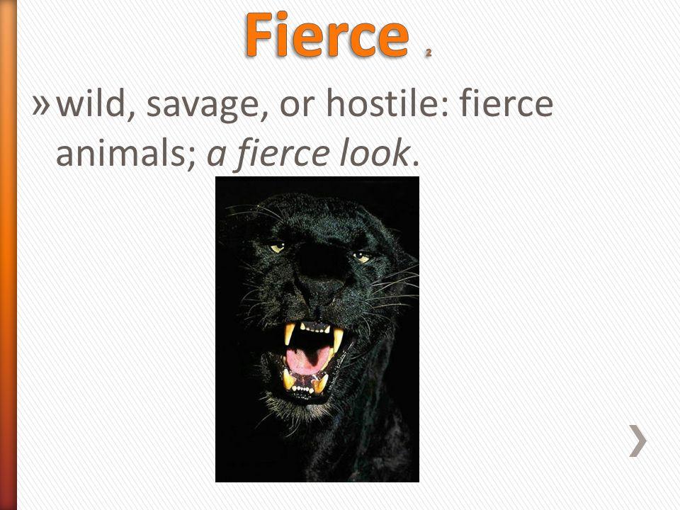 » wild, savage, or hostile: fierce animals; a fierce look.