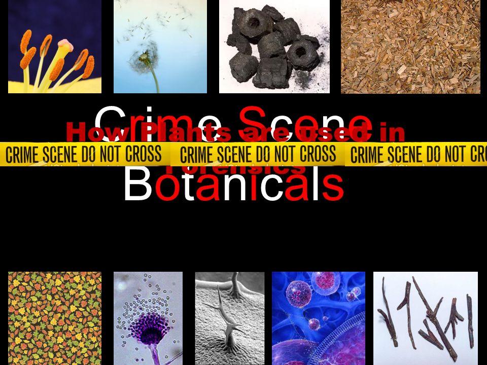 Crime SceneBotanicalsCrime SceneBotanicals How Plants are used in Forensics