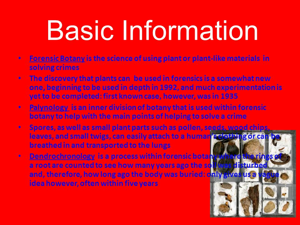 Basic Information Forensic Botany is the science of using plant or plant-like materials in solving crimes The discovery that plants can be used in forensics is a somewhat new one, beginning to be used in depth in 1992, and much experimentation is yet to be completed: first known case, however, was in 1935 Palynology is an inner division of botany that is used within forensic botany to help with the main points of helping to solve a crime Spores, as well as small plant parts such as pollen, seeds, wood chips, leaves, and small twigs, can easily attach to a human's clothing or can be breathed in and transported to the lungs Dendrochronology is a process within forensic botany where the rings of a root are counted to see how many years ago the soil was disturbed and, therefore, how long ago the body was buried: only gives us a vague idea however, often within five years
