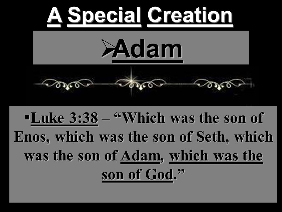 A Special Creation  Adam  Luke 3:38 – Which was the son of Enos, which was the son of Seth, which was the son of Adam, which was the son of God.
