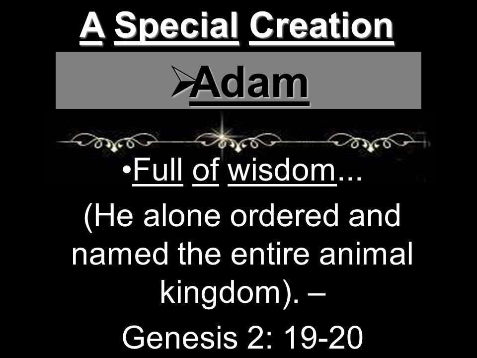 A Special Creation  Adam Full of wisdom... (He alone ordered and named the entire animal kingdom).