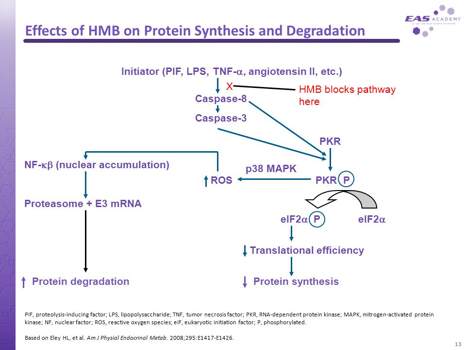 Effects of HMB on Protein Synthesis and Degradation Initiator (PIF, LPS, TNF- , angiotensin II, etc.) Caspase-8 Caspase-3 PKR p38 MAPK PKR P eIF2  e