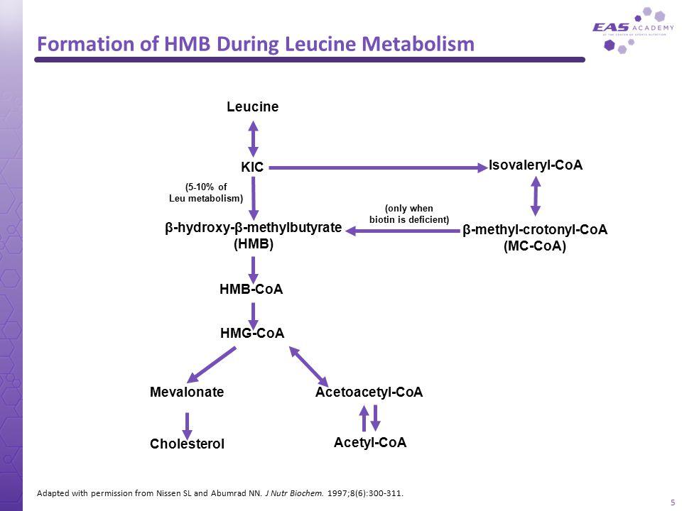 Formation of HMB During Leucine Metabolism Adapted with permission from Nissen SL and Abumrad NN. J Nutr Biochem. 1997;8(6):300-311. Leucine KIC Isova