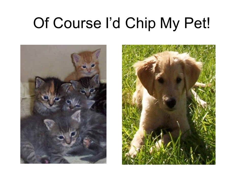 Of Course I'd Chip My Pet!
