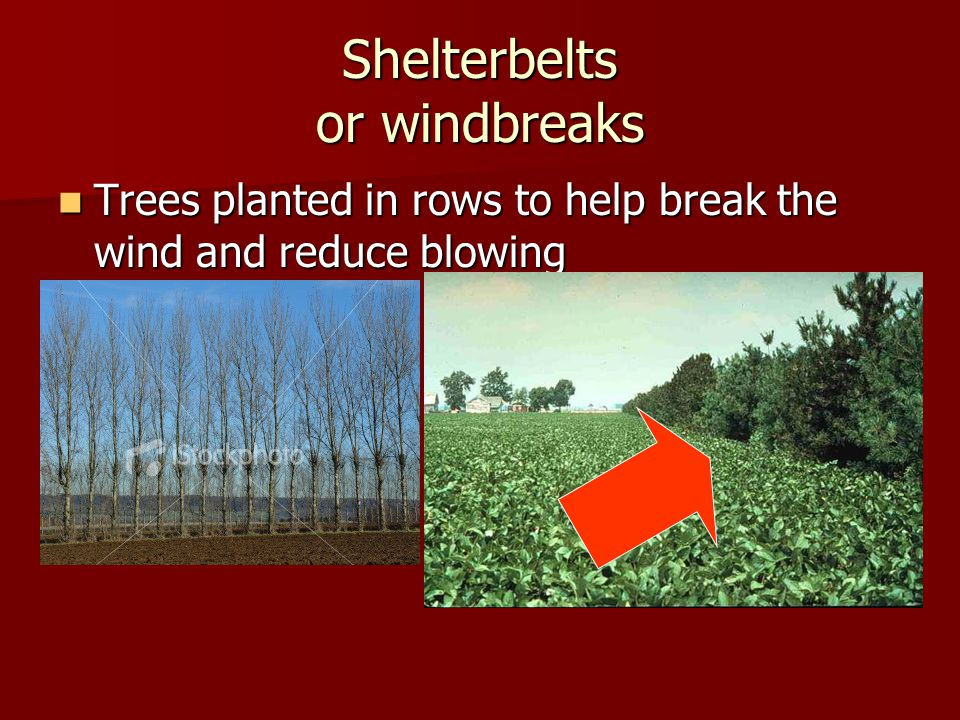 Shelterbelts or windbreaks Trees planted in rows to help break the wind and reduce blowing Trees planted in rows to help break the wind and reduce blowing