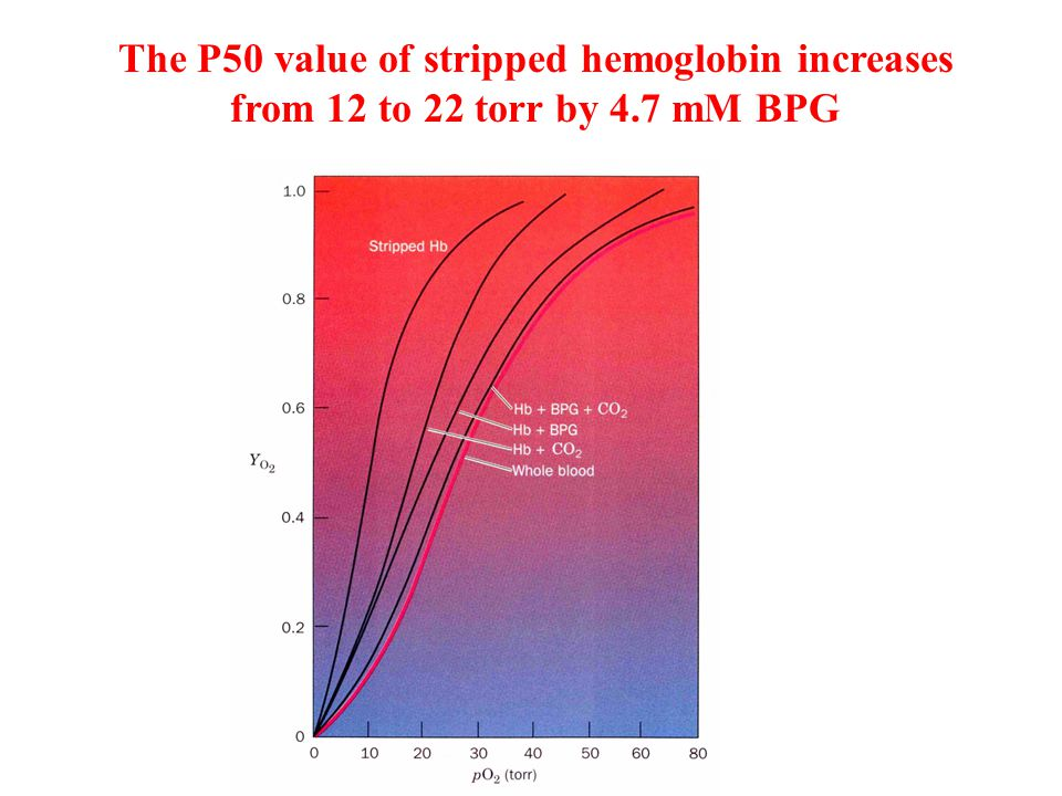 The P50 value of stripped hemoglobin increases from 12 to 22 torr by 4.7 mM BPG