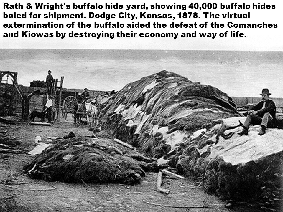 Rath & Wright's buffalo hide yard, showing 40,000 buffalo hides baled for shipment. Dodge City, Kansas, 1878. The virtual extermination of the buffalo
