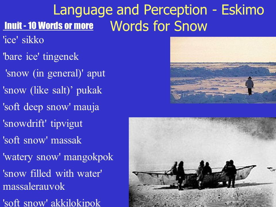 Language and Perception - Eskimo Words for Snow Inuit - 10 Words or more 'ice' sikko 'bare ice' tingenek 'snow (in general)' aput 'snow (like salt)' p