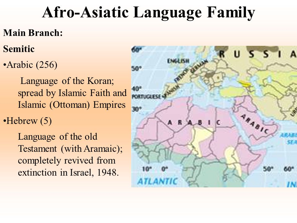Afro-Asiatic Language Family Main Branch: Semitic Arabic (256) Language of the Koran; spread by Islamic Faith and Islamic (Ottoman) Empires Hebrew (5)