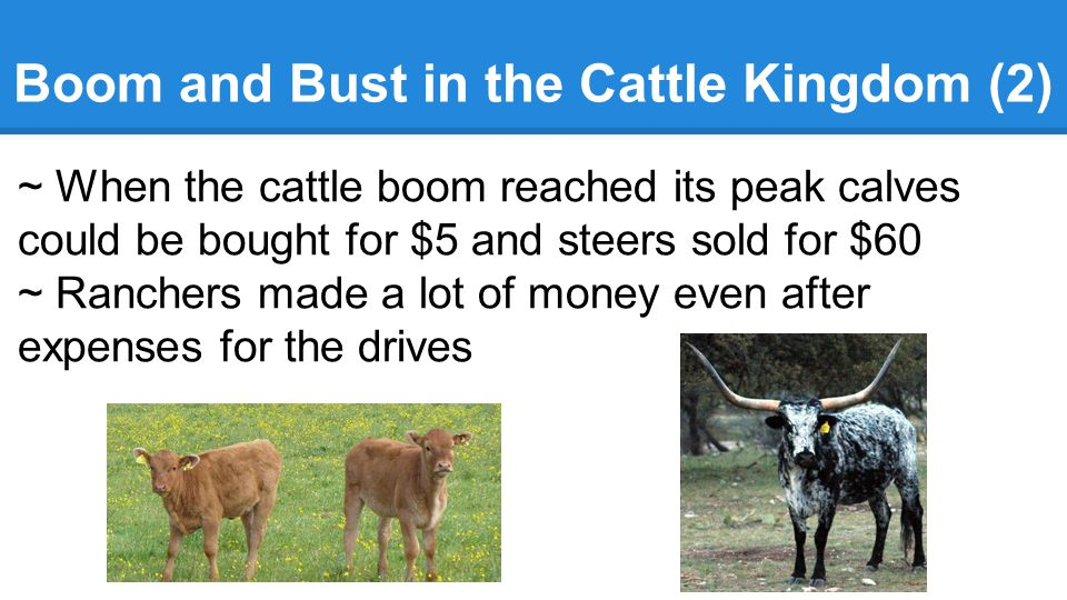 Boom and Bust in the Cattle Kingdom (2) ~ When the cattle boom reached its peak calves could be bought for $5 and steers sold for $60 ~ Ranchers made