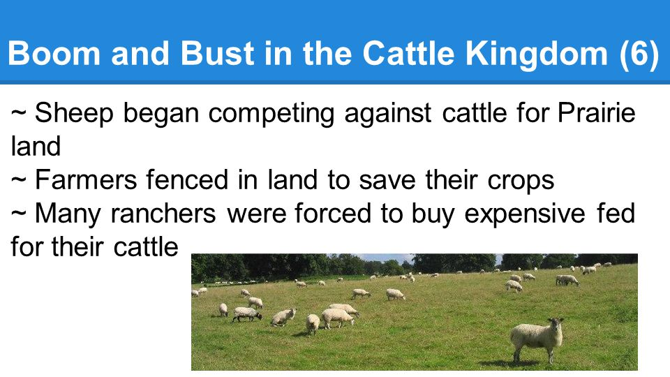 Boom and Bust in the Cattle Kingdom (6) ~ Sheep began competing against cattle for Prairie land ~ Farmers fenced in land to save their crops ~ Many ranchers were forced to buy expensive fed for their cattle