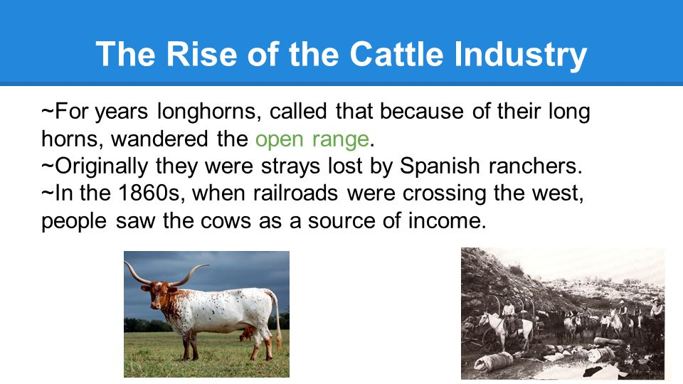 The Rise of the Cattle Industry ~For years longhorns, called that because of their long horns, wandered the open range.