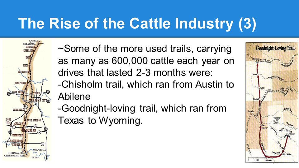 The Rise of the Cattle Industry (3) ~Some of the more used trails, carrying as many as 600,000 cattle each year on drives that lasted 2-3 months were: -Chisholm trail, which ran from Austin to Abilene -Goodnight-loving trail, which ran from Texas to Wyoming.