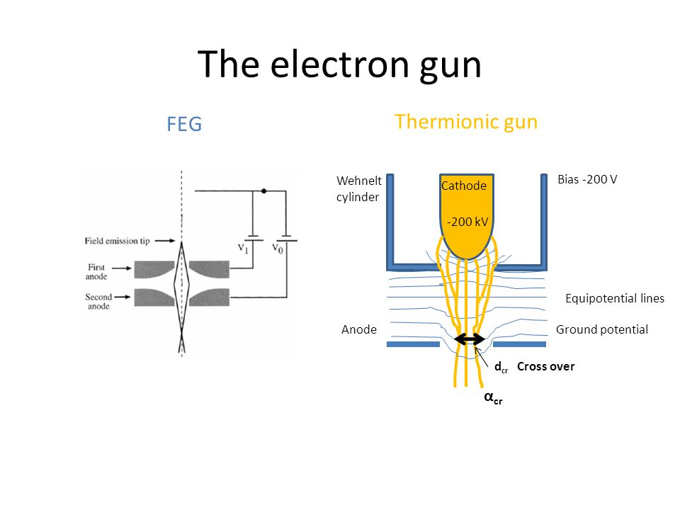 The electron gun Bias -200 V Ground potential -200 kV Anode Wehnelt cylinder Cathode d cr Cross over α cr Equipotential lines Thermionic gun FEG