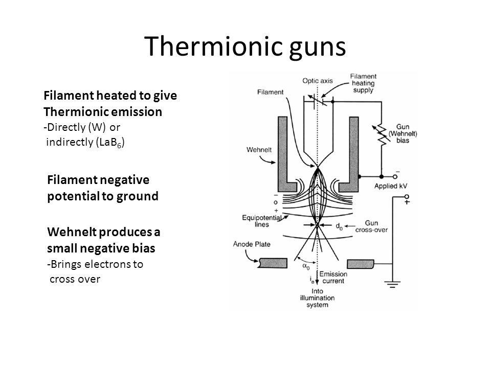 Thermionic guns Filament heated to give Thermionic emission -Directly (W) or indirectly (LaB 6 ) Filament negative potential to ground Wehnelt produces a small negative bias -Brings electrons to cross over