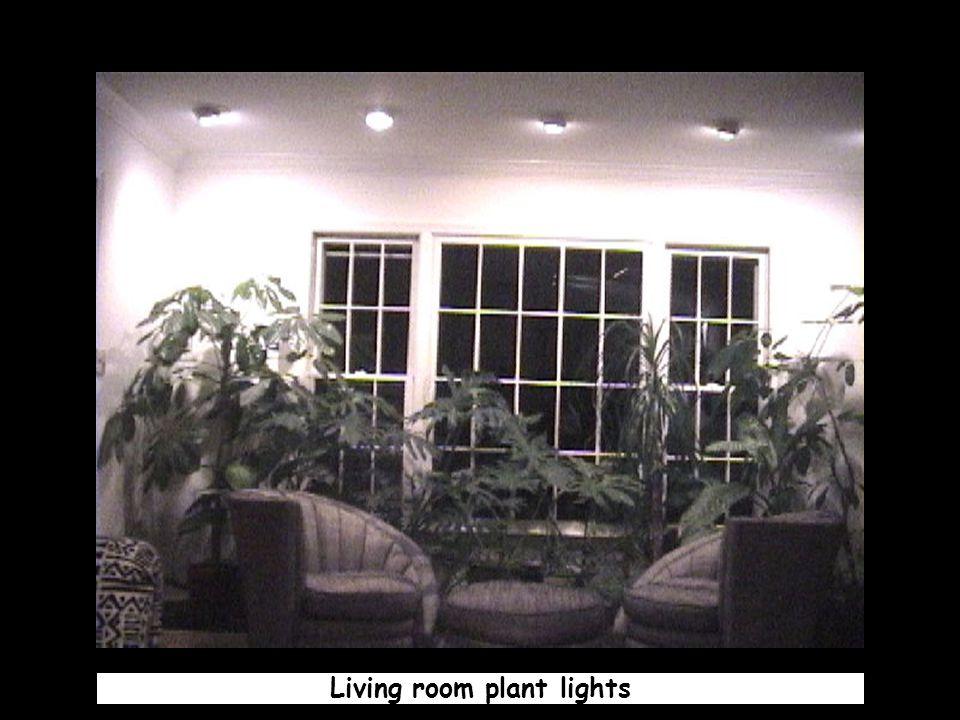Living room plant lights
