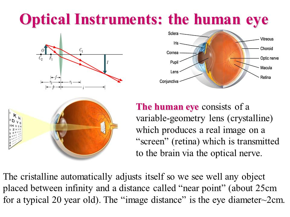 "The human eye The human eye consists of a variable-geometry lens (crystalline) which produces a real image on a ""screen"" (retina) which is transmitted"