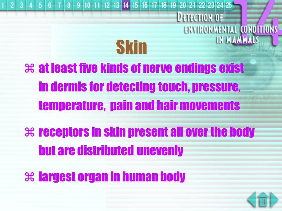 stimulus receptor central nervous system effector response