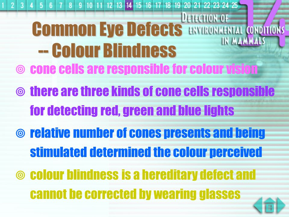 Common Eye Defects -- Long Sight  it occurs when light from near objects focused behind the retina  may due to eyeball too short or lens becomes too thin  only distant object can be seen clearly  corrected by wearing convex lenses which converge light from near object before reaching the eye
