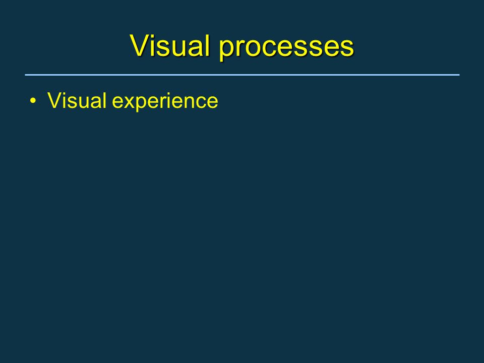 Visual processes Visual experience